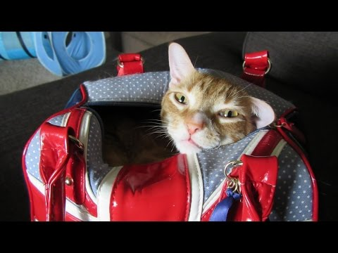 Behind The Scenes! Marmalade *STAR CAT*