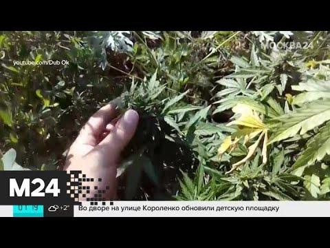 Марихуана видео ютуб конопля ташкент