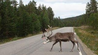 Едем в Лапландию!(, 2013-11-22T13:35:42.000Z)