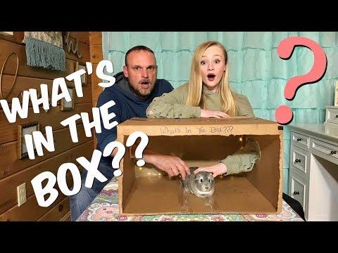 Whats in The Box ?? Princess Ella VS her Dad