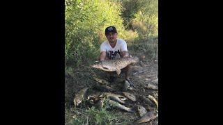 Рыбалка на реке Или Амур сазан Арал тобе