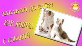 До слёз смешно! Kак кошка с собакой! #1 | CAT vs. DOG | Funny Animals!