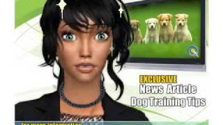 How To House Train An Older Dog - Video 4 Of Series - How To Train My Dog