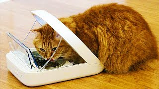 5 GADGETS YOUR CAT BADLY WANTS!