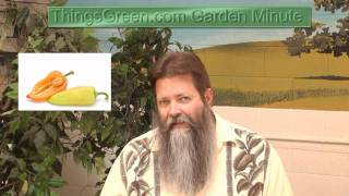 Capsaicin - Things Green Gardening Minute with Nick Federoff