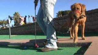 Ball Distractions For Guide Dog Puppy S1e30