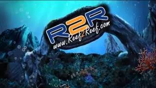 Reef2Reef TV Episode 35: Introducing Blanco to the world and let's talk Tangs!