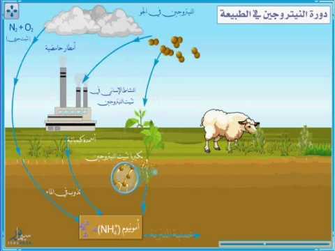 دورة النيتروجين في الطبيعة pdf