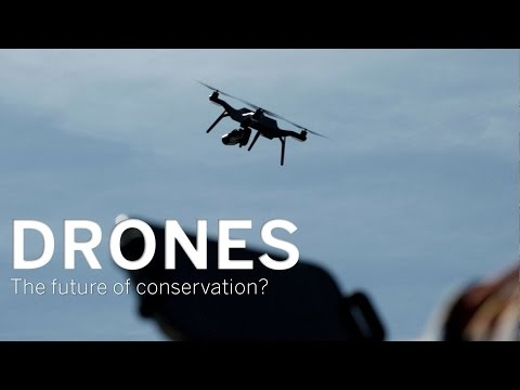 Drones: The Future of Conservation?