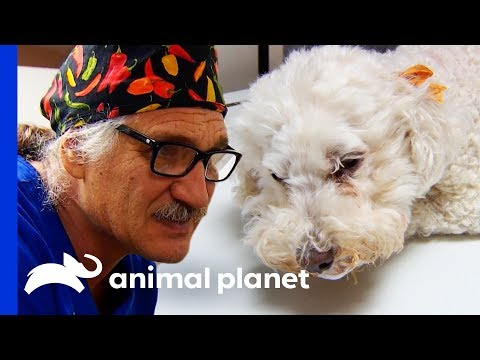 A Case Of Severe Pneumonia Puts This Pup In Critical Condition | Dr Jeff: Rocky Mountain Vet