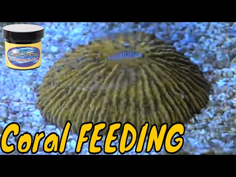 Coral Feeding Time Lapse
