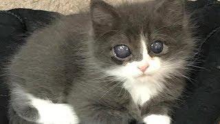 Котёнок родился слепым, и шансов найти дом у него было мало, но потом кое что произошло...