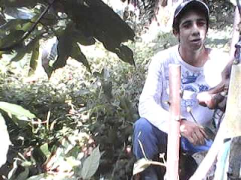 Clone de Cacau PS 1319 Video 02 | Doovi