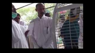 riyadh pigeons market ii سوق الحمام بالرياض الجزء 2
