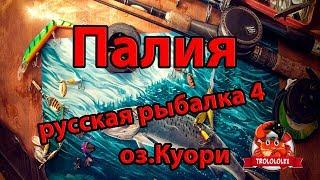 Російська рибалка 4 Палія звичайна оз Куори. Russian fishing 4