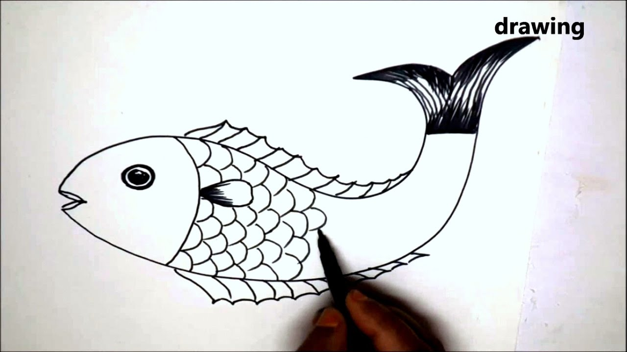 Uncategorized Videos How To Draw how to draw fish animals for kids colouring videos drawing nature