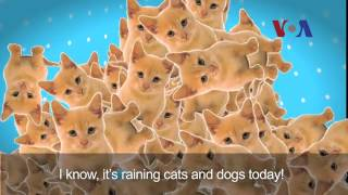 English in a Minute: Cats and Dogs