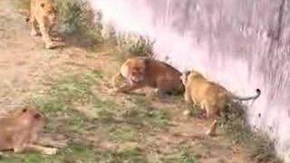 多摩動物園に行ったときに遭遇しました。