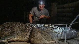 Terrifying! Three sisters Catch Crocodile While Fishing In My Village - How To Catch Crocodile