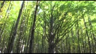 Storia e Natura del Parco Nazionale dell'Aspromonte