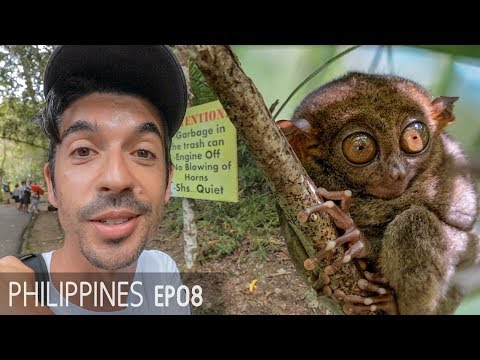 Bohol Day Trip - Tarsiers, Chocolate Hills & Cebu Ferry