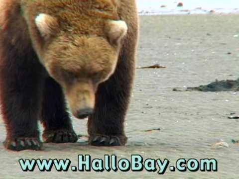 The Hallo Bay Experience