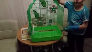 Правильная уборка клетки попугаев неразлучников
