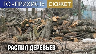 Браконьеры распиляли деревьев на 700 000 грн.