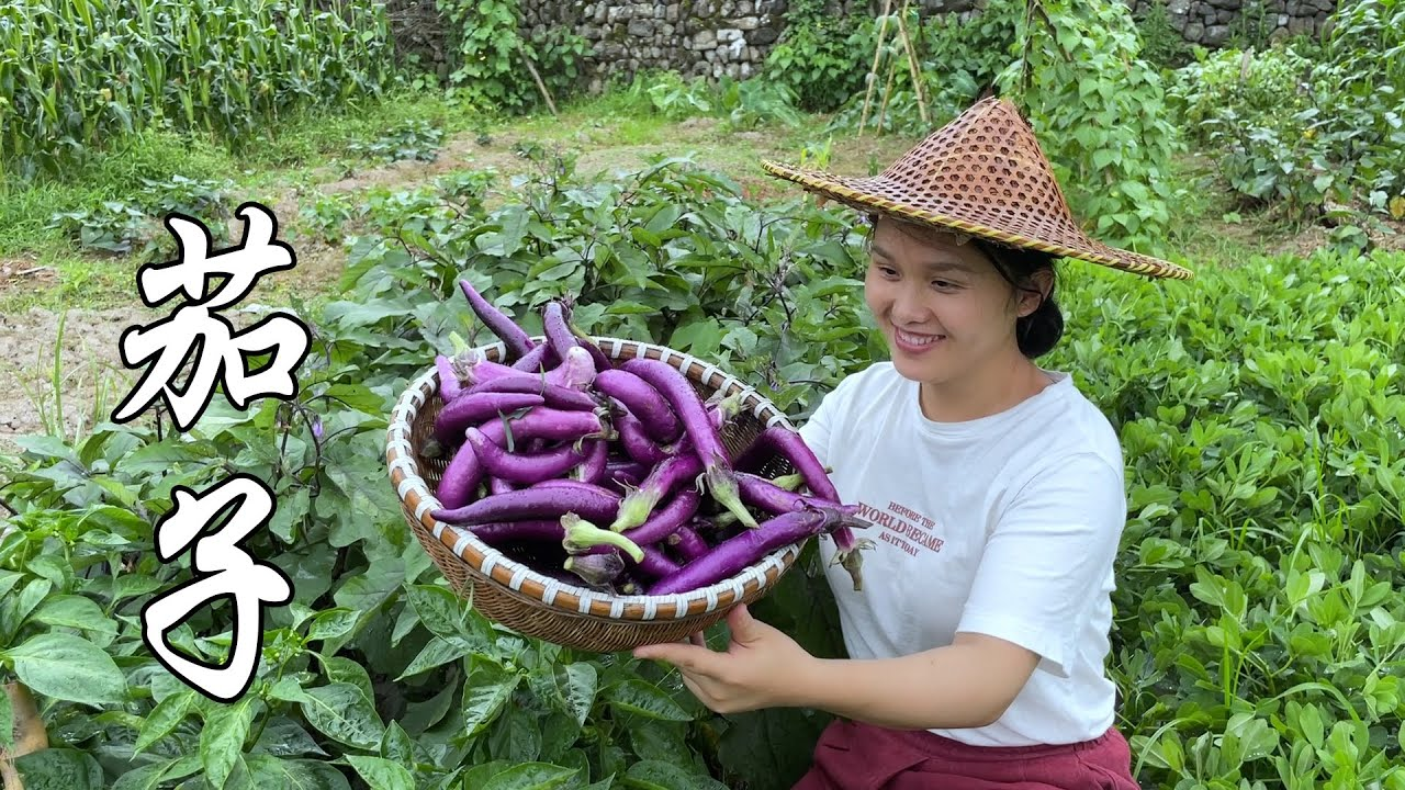 两月前种的茄子,茄子长得吃不完,在农村种蔬菜真不难