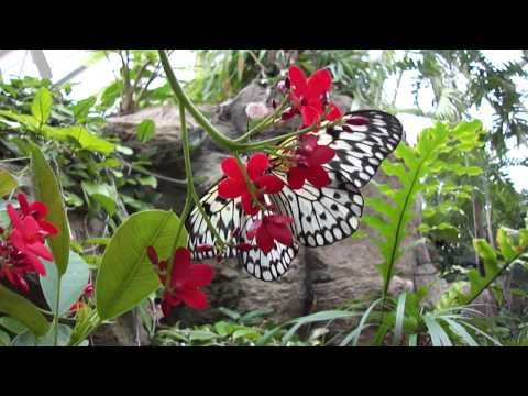 Butterfly at Franklin Park Conservatory Columbus Ohio