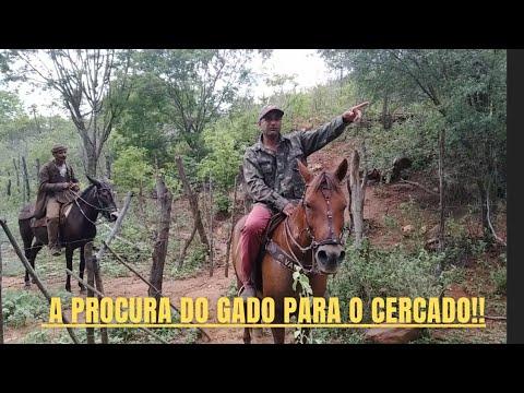 A procura do gado para o cercado!! #manejocomogado @Meu Sertão, minha terra!!!