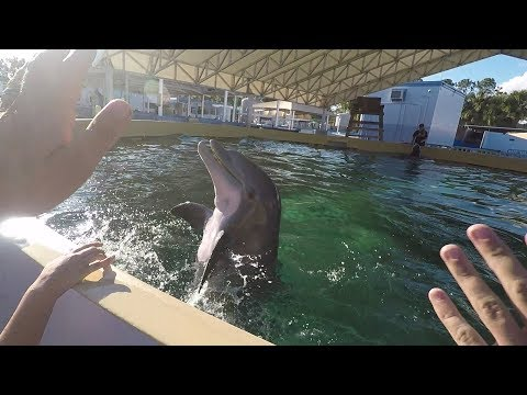 Private tour: SeaWorld rehabilitation center behind the scenes!