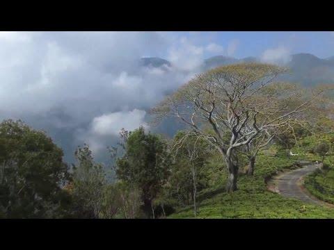 INCREDIBLE NILGIRI BIOSPHERE RESERVE MESMERISING 4K/HD