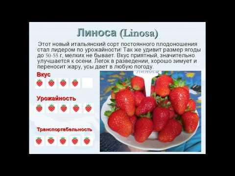 Видео.Самые вкусные и урожайные сорта ремонтантной клубники НСД