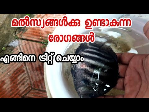 #how To #treat #fish #diseases