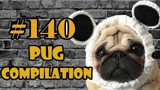 Funny Dogs but only Pug Videos   Pug Compilation 140 - InstaPug