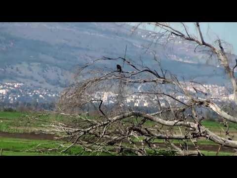 The Hula Valley -  Israel - Natural Wonder