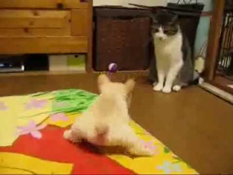 Щенок пытается прогнать кота