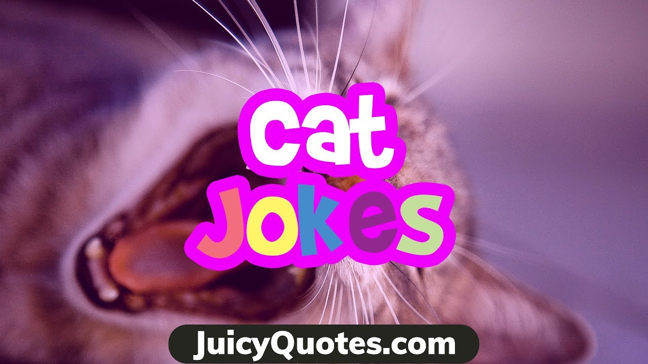Funny Cat Jokes and Puns 2018 - Clean Jokes for any humor ... Funny Cat Videos Clean