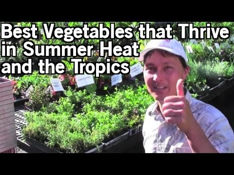 Best Vegetables that Thrive in Summer Heat & Tropical Climates