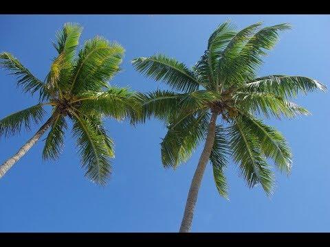 Palm Tree Update