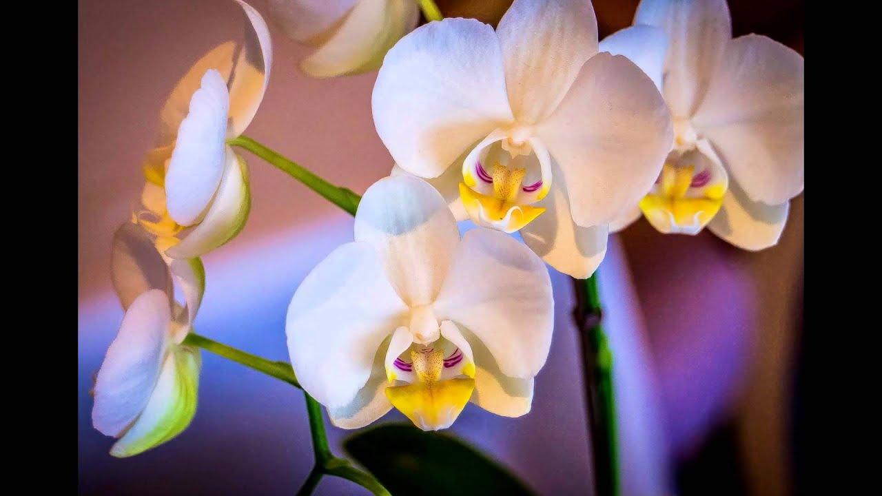 Группа для обмена, покупки, продажи фаленопсисами, орхидеями. Выкладывайте фотографии своих красавиц. А также всего необходимого для выращивания орхидей (кора, мох, прозрачные горшки).