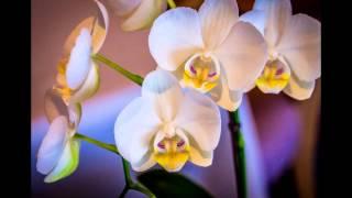 Самые красивые орхидеи. The best photos of orchids