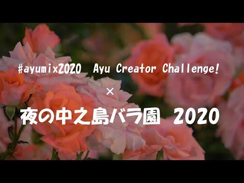 中之島 バラ 園 2020