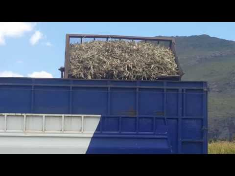 Faizal Trucks loading  sugarcane in  Mauritius at Medine