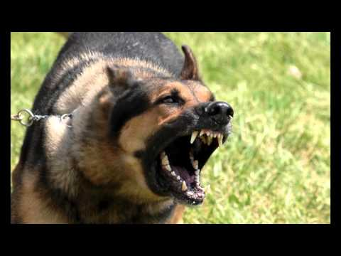 Download-Large-Dog-Growling-Sounds-Effects-MP3