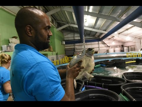 Endangered turtles from New England arrive in New Orleans for rehabilitation
