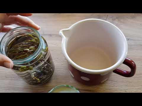 Čaj od vrbe - magični hormon za biljke