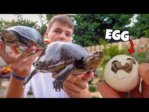 My TURTLES had BABIES!!!