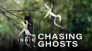 Solving the Mystery of the Ghost Orchid | Seeker Indie